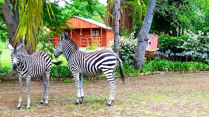 at Zebra Rest Cottage and Eco Farm   TravelGround