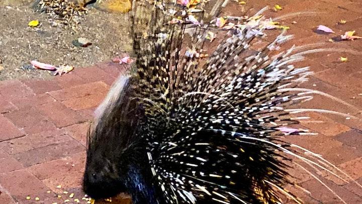 Seaforth Accommodation at Porcupine Walk | TravelGround