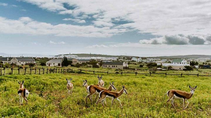 Longacres Country Landgoed Akkommodasie by The Stables Cottages | LekkeSlaap
