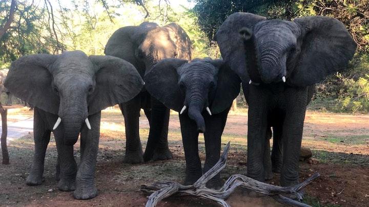 at Mabalingwe Elephant Lodge | TravelGround