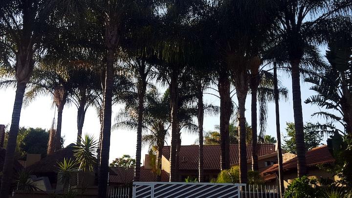 at Palm Tree Accommodation   TravelGround