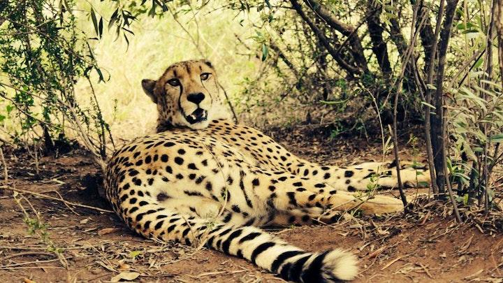 Thabazimbi Accommodation at Marakele Animal Sanctuary | TravelGround