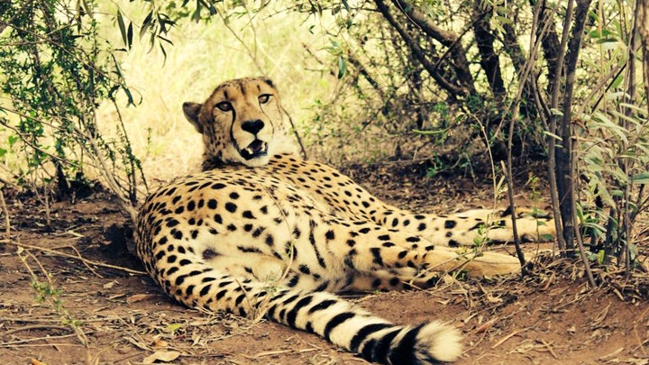 at Marakele Animal Sanctuary | TravelGround