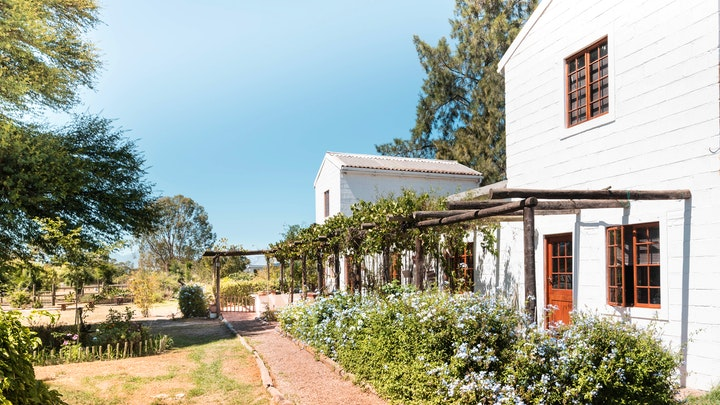 at Boerfontein Home Of Olivision | TravelGround