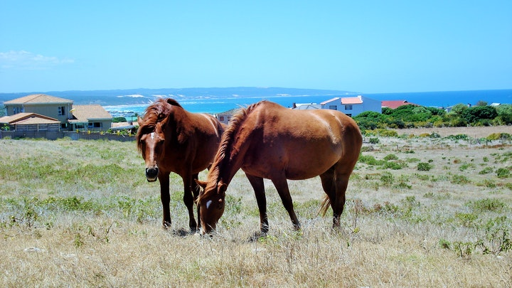 Garden Route Accommodation at Oppi Plaas by die See | TravelGround