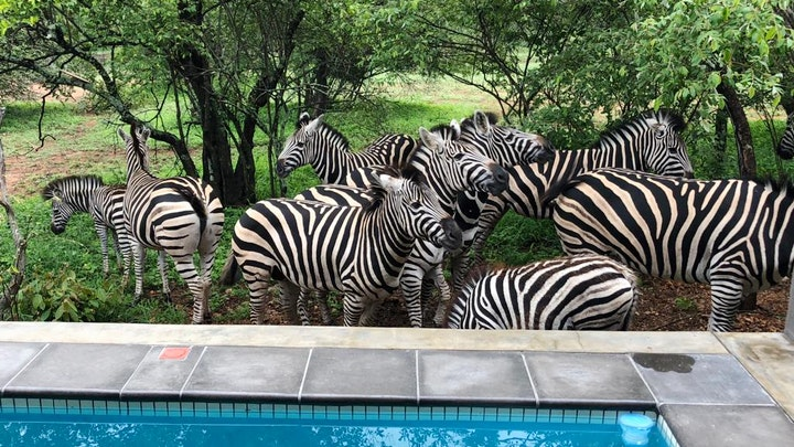 Marloth Park Accommodation at Kruger Willows | TravelGround