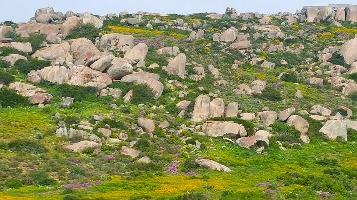 Britannica Heights Akkommodasie by West Coast Cactus Acc   LekkeSlaap