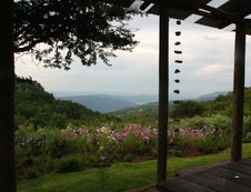 Thora Boloka views