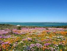 West Coast Flower Season