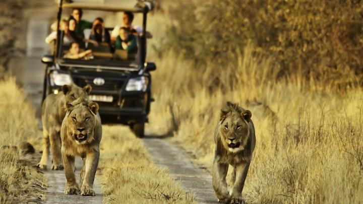 Pilanesberg National Park Accommodation at Morokolo Safari Lodge | TravelGround