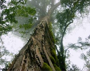Kurisa Moya's forest