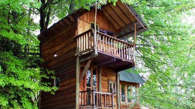 at Sycamore Avenue Treehouse Accommodation | TravelGround