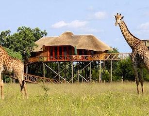 Pezulu Tree House Game Lodge,Hoedspruit,South Africa,Kruger National Park