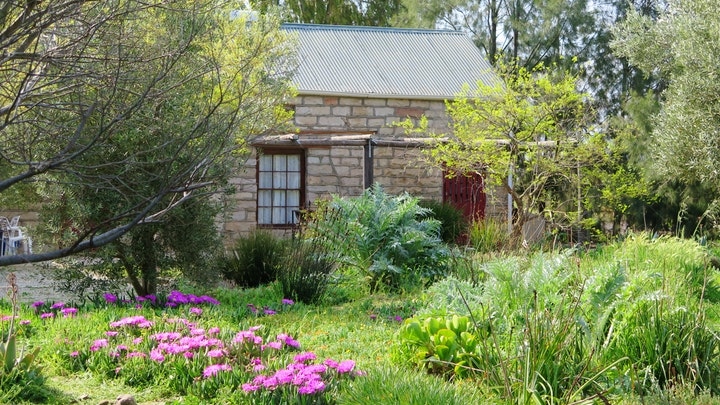 Nieuwoudtville Accommodation at Piet se Huis Guesthouse | TravelGround