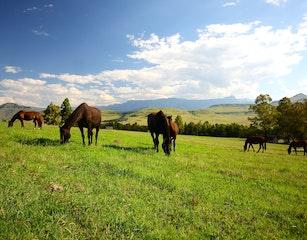 Montusi's Horses at leisure