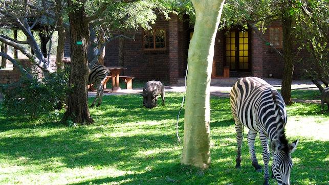 at Phumula Kruger Lodge and Safaris   TravelGround