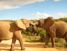 ELEPHANTS IN PARK ONLY 4KM AWAY