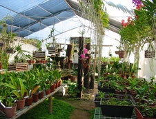 One of the Orchid Tunnels in the nursery