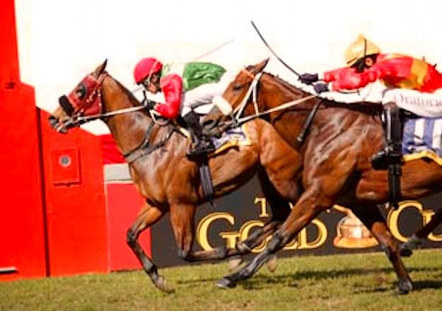 horse_racing_Greyville_Racevourse