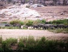 Elephant crocodile river