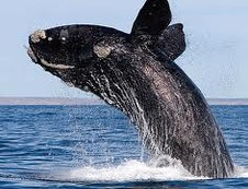 Go whale watching!