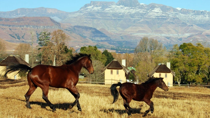 at Ardmore Guest Farm | TravelGround