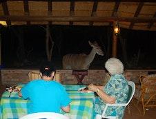Kudu visiting