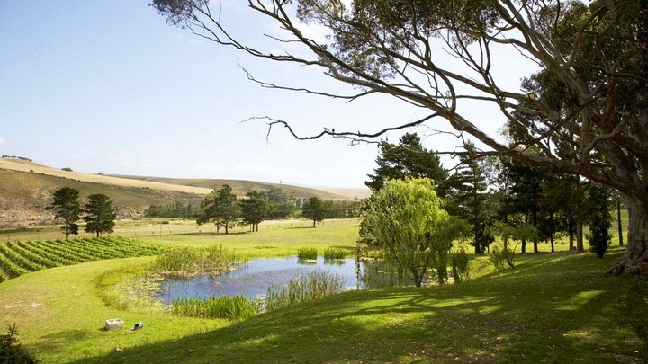 at Blue Gum Country Estate | TravelGround