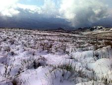 Snow 2012