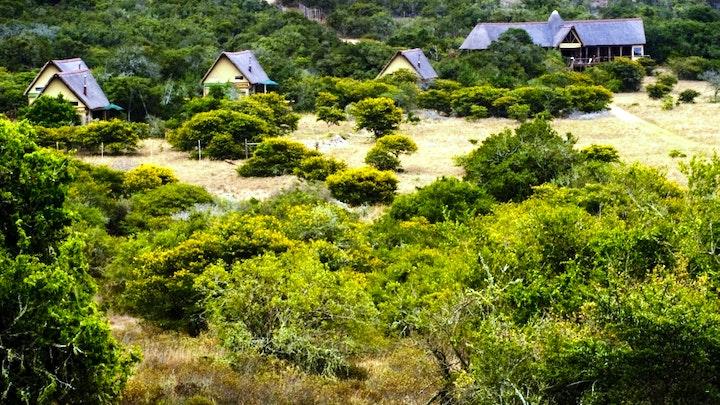 at Amakhala Bush Lodge | TravelGround