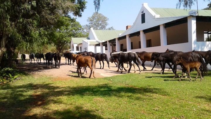 Bela-Bela Akkommodasie by Thandile Country Lodge | LekkeSlaap