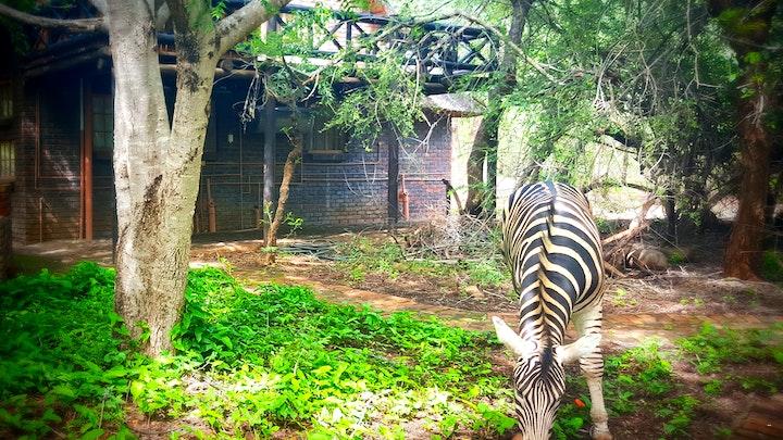 Marlothpark Akkommodasie by Phumula Kruger Lodge and Safaris | LekkeSlaap
