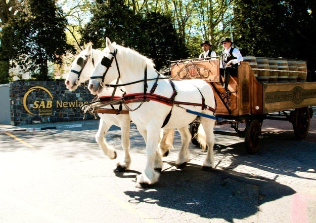 Horse carriage at Newlands Brewery