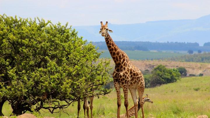 Paulpietersburg Akkommodasie by Basangoma Game Ranch | LekkeSlaap