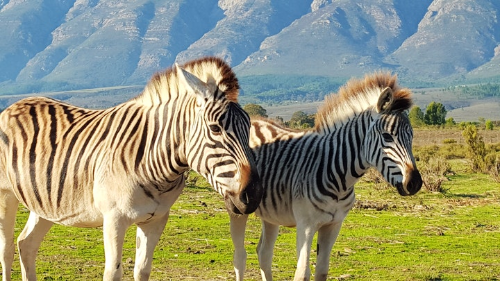 by Fynbos Guest Farm | LekkeSlaap
