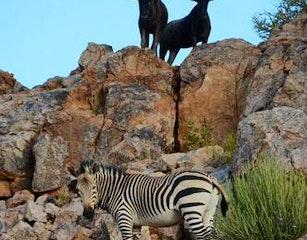 wildlife in Augrabies