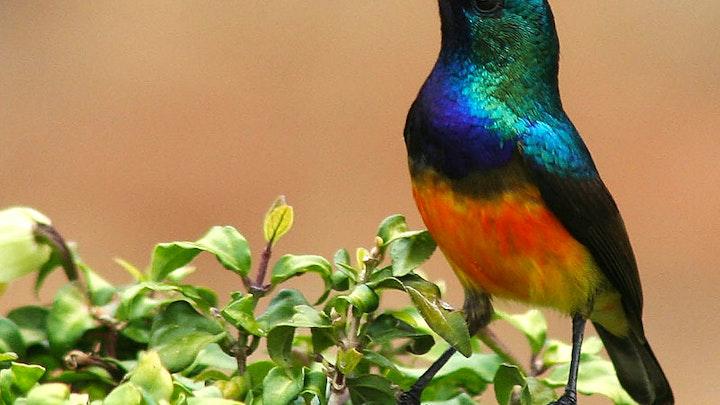 Durbanville Akkommodasie by Sunbirds Nest | LekkeSlaap