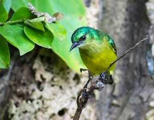Abundant Birdlife