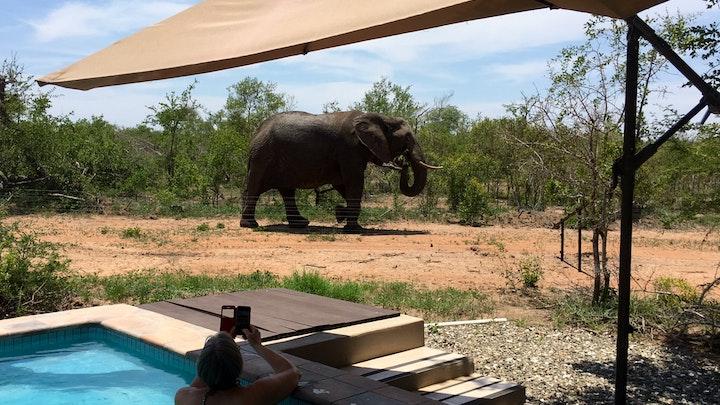 Mjejane Game Reserve Accommodation at Badger Bush Lodge | TravelGround