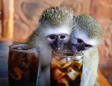 Lucky and elvis, having a colddrink