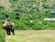 Elephants in front of the lodge