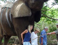 Elephant rides in the area