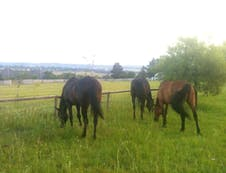 Horses in the paddocks