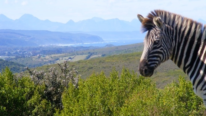 by Mahlangeni Boutique Game Reserve | LekkeSlaap