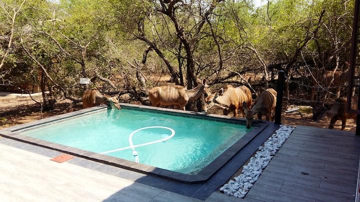 by Honey Badger Safari House | LekkeSlaap