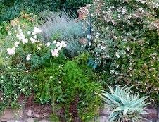Garden at Alba House