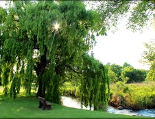Sitting under the Willow tree