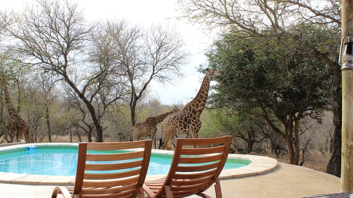 Marloth Park Accommodation at Leeus Villa | TravelGround