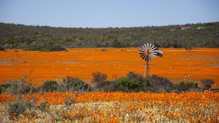 Namakwaland Akkommodasie by Namaqua Flower Skilpad Camp | LekkeSlaap