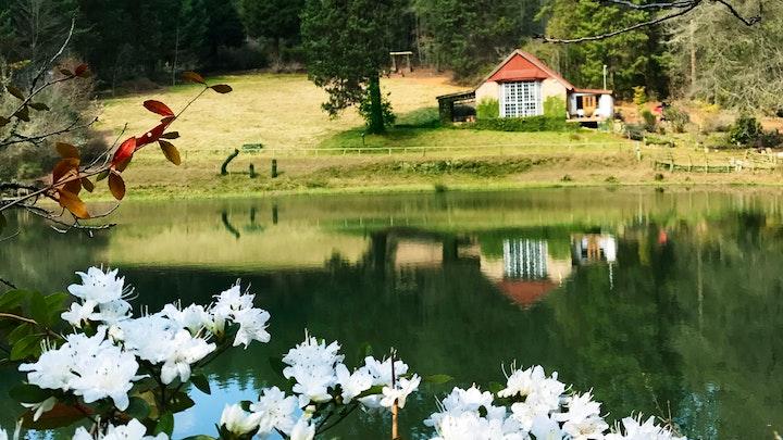 by Sequoia Garden Retreat | LekkeSlaap